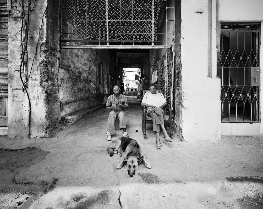 Chien Coucher La Havane Cuba
