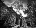 Ta Prohm V Angkor Cambodge